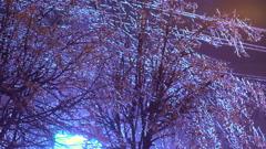 Trees in an Frozen rain Stock Footage