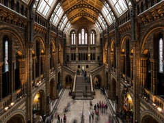 Natural history museum Stock Footage