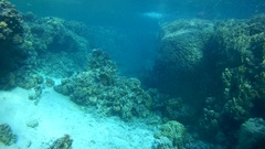 Snorkeling - young woman dives into school of Hardyhead Silverside Stock Footage