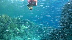 Snorkeling - young woman dives into the school of fish Hardyhead Silverside Stock Footage