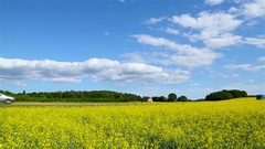 Scenic road through a rapeseed field Stock Footage