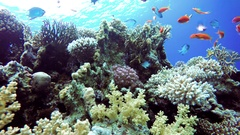 Coral reef, tropical fish. Warm ocean and clear water. Underwater world. Stock Footage