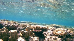 Shallow coral reef is reflected from the surface of the water Stock Footage