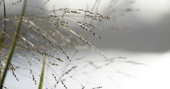 A closeup of waterfront weeds blowing in the wind - 4k Stock Footage