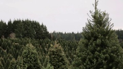 Snow falling at a Christmas tree farm in the country. Snowy holiday scene with D Stock Footage