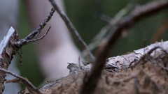Hand grasping a branch Stock Footage