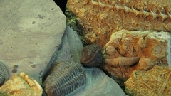 Prehistoric life forms, MICRO VIEW with a zoom in and zoom out Stock Footage