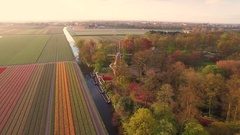 Drone filming windmill in Dutch landscape at Keukenhof over tulip field Stock Footage