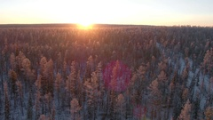 Low aerial shot flying over the snowy forest at northen morning with sun Stock Footage
