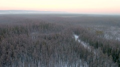 Aerial view of gloomy endless forest with spruces. forest continues to the Stock Footage