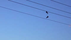 Shoes haning on a power line Stock Footage
