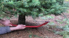 Struggling to cut down a Christmas tree. Cutting down a Christmas tree. Using sa Stock Footage