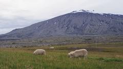 Iceland volcano landscape with beautiful volcano Snaefellsjokull Stock Footage