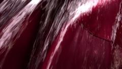 FPV 02368 Grape Harvest Machine - Bordeaux Vineyard Stock Footage