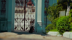 Cat in Asia guards the entrance to the temple Cat on the street Stock Footage