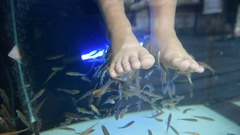 Foot spa by little fish  Stock Footage