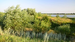 Nature of central Russia - forest steppe Stock Footage