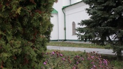 The thuja tree on the background of the Church, close-up Stock Footage