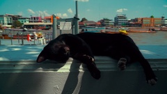 Cat resting in the shade on the river in Bangkok Stock Footage