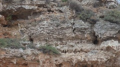 Amazing spongy structure stone brown rock texture wild habitat mineral sediment  Stock Footage