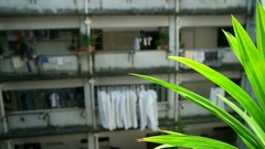 Hong Kong - Close up of plant with typical residential building in background. Stock Footage