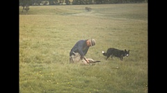 Vintage 16mm film, 1952, Scotland shearing sheep in the field Stock Footage