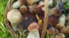 Concept organic natural product, wildlife. Mushrooms in Basket. Dolly Left Right Stock Footage