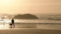 A Walk With The Dog On Sandy Coast Stock Footage