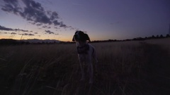 Steadicam Shot Of Dog Standing Still In Field, Dog Starts Running (Slow Motion) Stock Footage