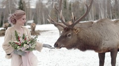 Cutie deer in forest Stock Footage