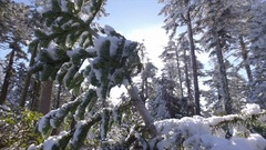 Snow Covered Trees Alond Roadside Stock Footage