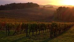 FPV 02380 Bordeaux Vineyard Sunrise Stock Footage