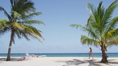 Beach with palm trees on against clear blue sky Stock Footage