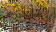 River at the Appalachian Trail Stock Footage