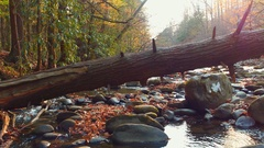 River at the Appalachian Trail slider video Stock Footage