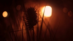 Dry orange grass close up shallow focus steadicam shot. 4K video Stock Footage