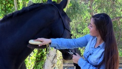 Woman and his horse, equestrian center, France Stock Footage