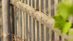 Rusty barbed wire on an old wooden fence Stock Footage