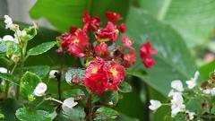 Garden flowers in the rain gently swinging in the breeze. Stock Footage
