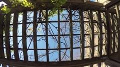 Trellis, vines and sky Stock Footage