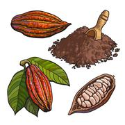 Cacao fruit, beans and powder, set of style vector illustrations Stock Illustration
