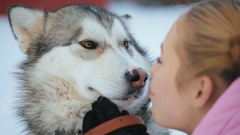 Portrait of a Dog Breeds of Malamute Stock Footage