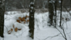 Forest In Winter Stock Footage