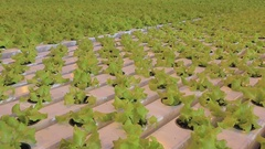 Lettuce hydroponically in a greenhouse Stock Footage