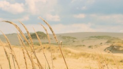 High Dry Grass in the Dunes Stock Footage