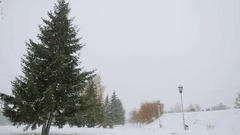 Park alley tree way winter during beautiful snowfall in slowmotion. 1920x1080 Stock Footage