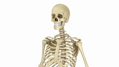 Human skull skeleton. Medically accurate 3D animation Stock Footage