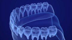 Mouth gum and teeth xray view. Medically accurate tooth 3D animation Stock Footage
