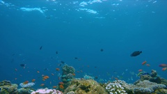 Lively coral reef edge with a lot of colorful fish Stock Footage