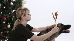 Young blonde woman puts Reindeer antlers on her German Shepherd Dog. Stock Footage
